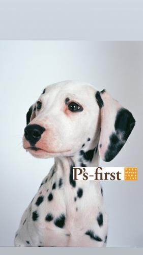 獣医師の資格を活かして、ペッツファーストで活躍しませんか?