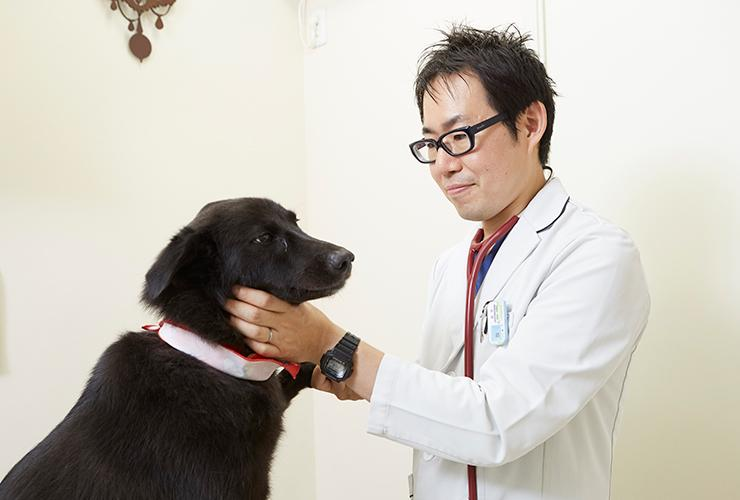 獣医師募集【栃木県・30万~】