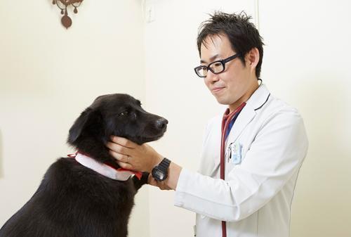動物看護師募集【月収17万~】