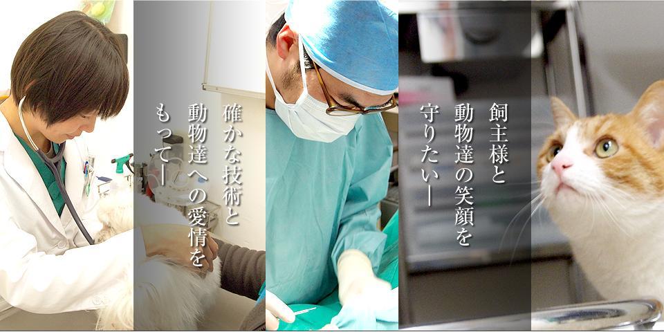 東京都町田市 獣医師募集!仲の良い職場です。