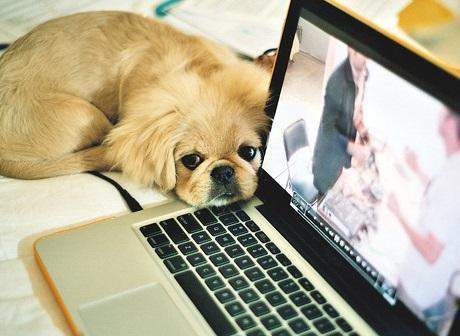 【経理総務事務】ペット業界のバックオフィス*新卒中途募集