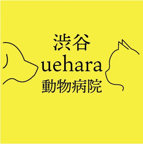 渋谷上原動物病院 動物看護師募集 2020年12月新規開院