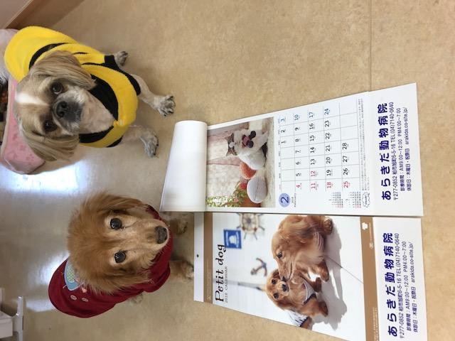 スタッフの犬たちです。一緒に出勤してます。
