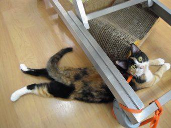 保護猫がスタッフの癒しです。