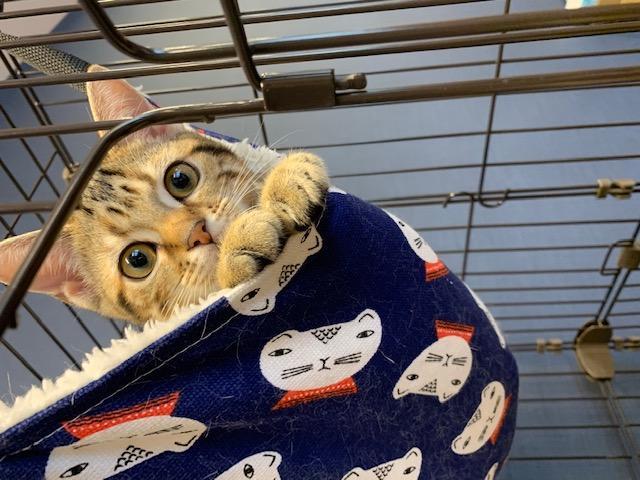 WOLVESHand看板猫の伊勢です♪