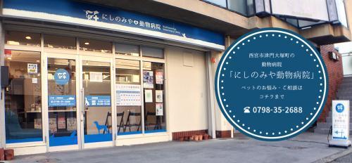 動物看護師募集中!!兵庫県西宮市 にしのみや動物病院