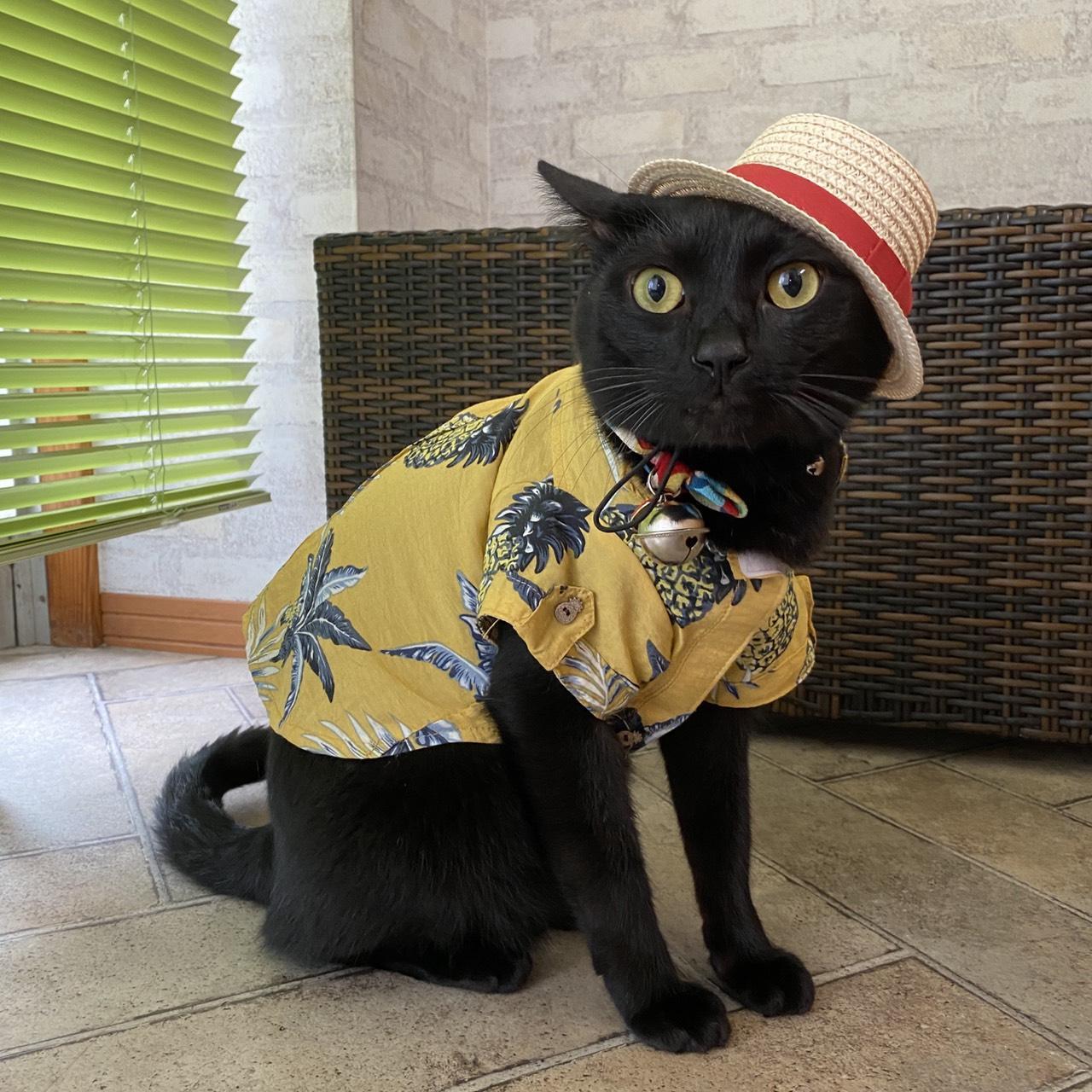 当院の看板猫「家康」です。たまに受付猫をしています。