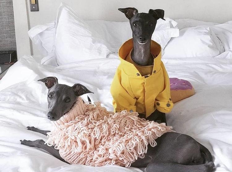 マックスボーン ペット洋服