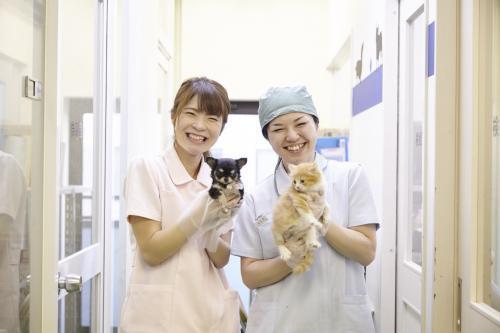 【静岡県富士市】子犬子猫のお世話のお仕事♪【アルバイト】