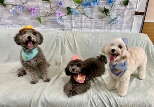 神戸市犬の幼稚園・ペットホテルでトレーナー募集中!