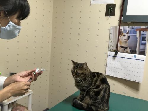 動物看護師・看護助手【社保補助】社員:パート同時募集