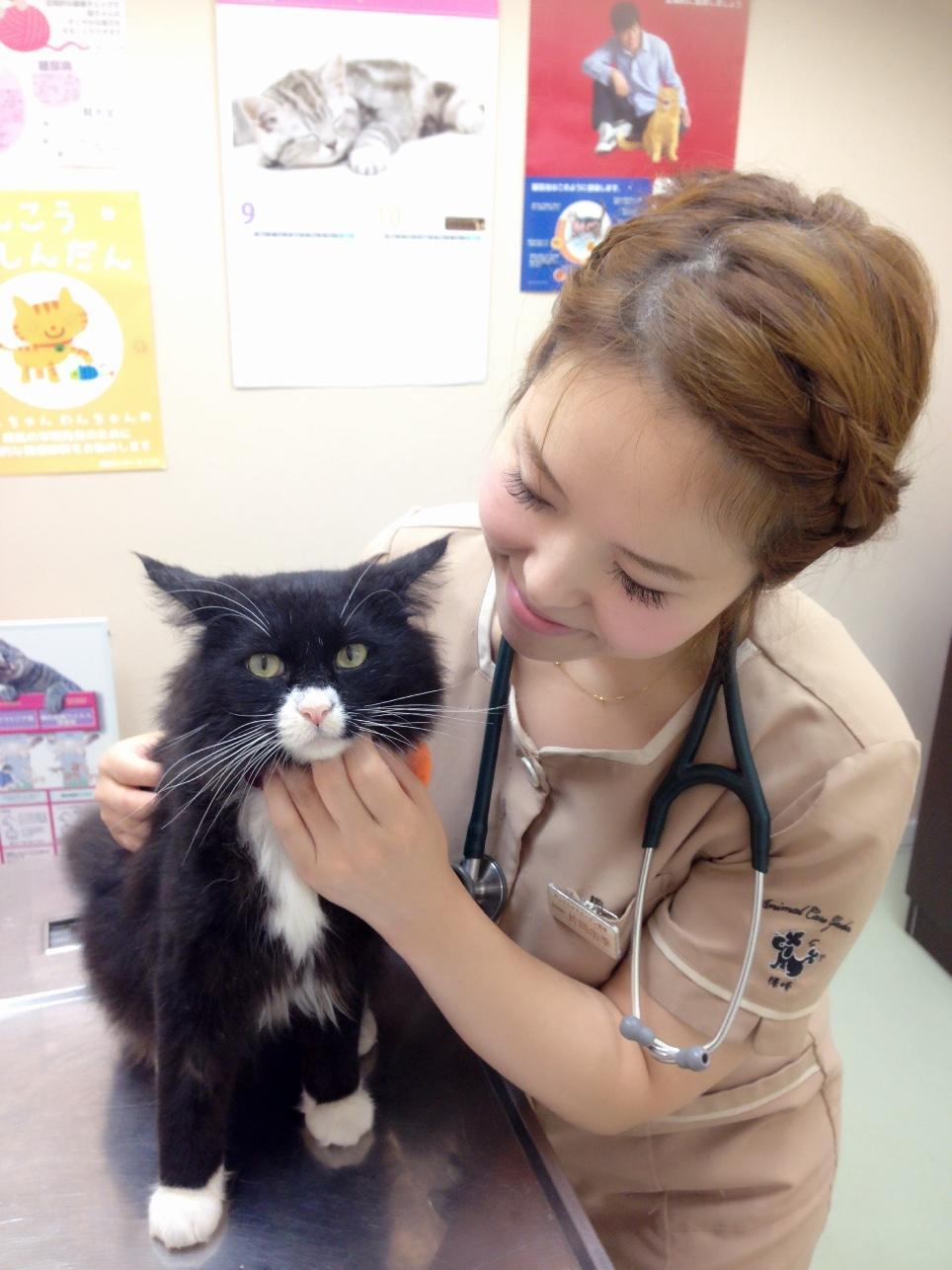 猫専用診察室完備