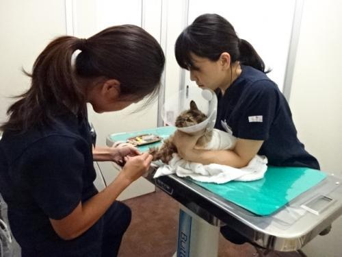 TNR日本動物福祉病院