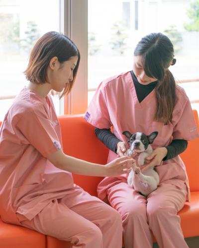 ☆明るく元気な動物看護士さん募集☆