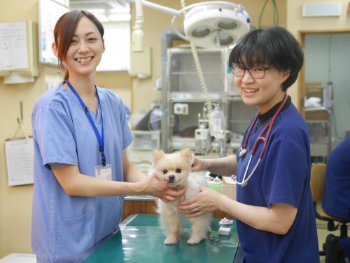 4月開院◆南東京動物医療センター◆動物心臓外科センター併設