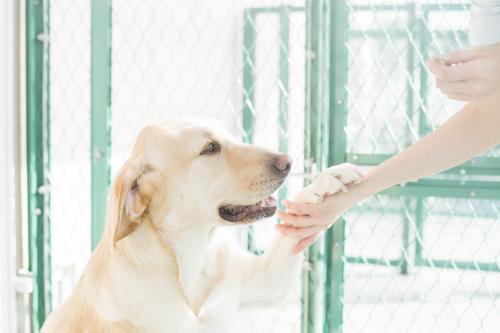 【新卒】動物看護師さん募集