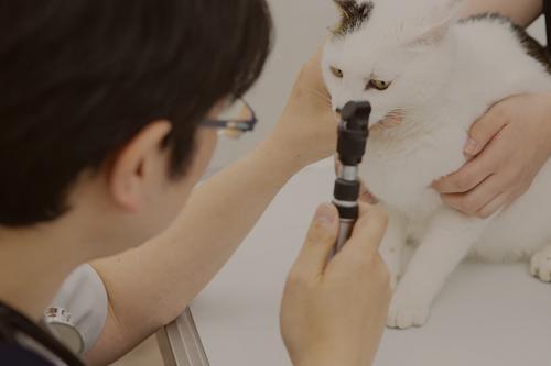 【さいたま市】パート獣医師