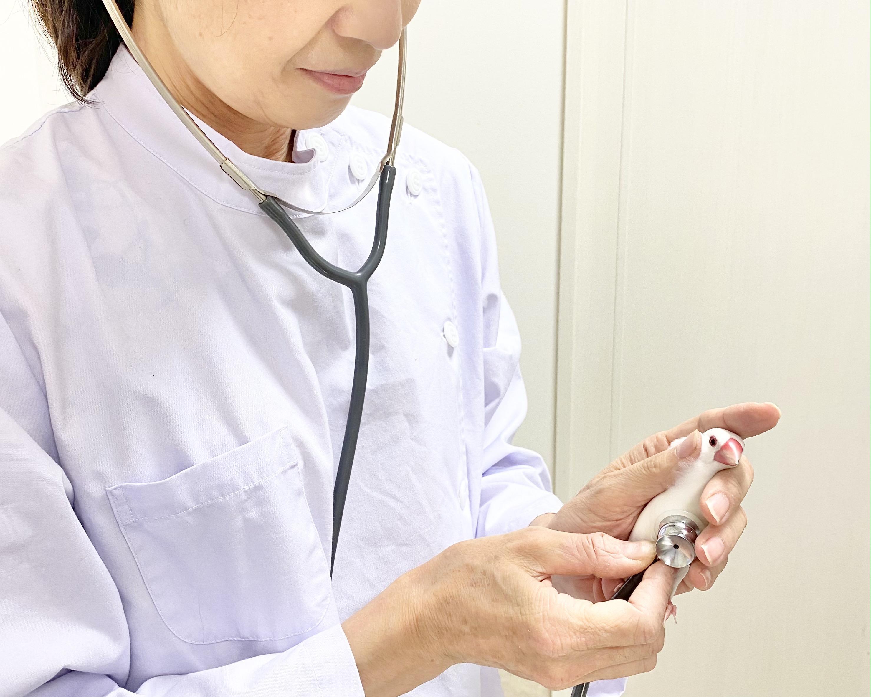 【小鳥と小動物の病院】獣医師募集/正社員/パート週1日〜可