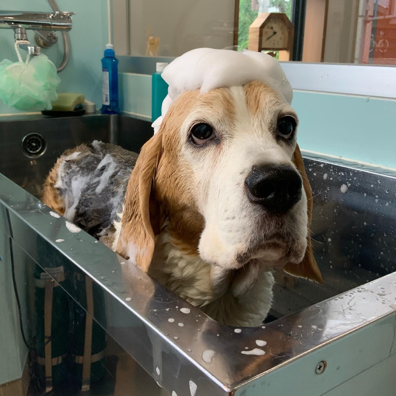 皮膚科の治療として薬浴も行っています