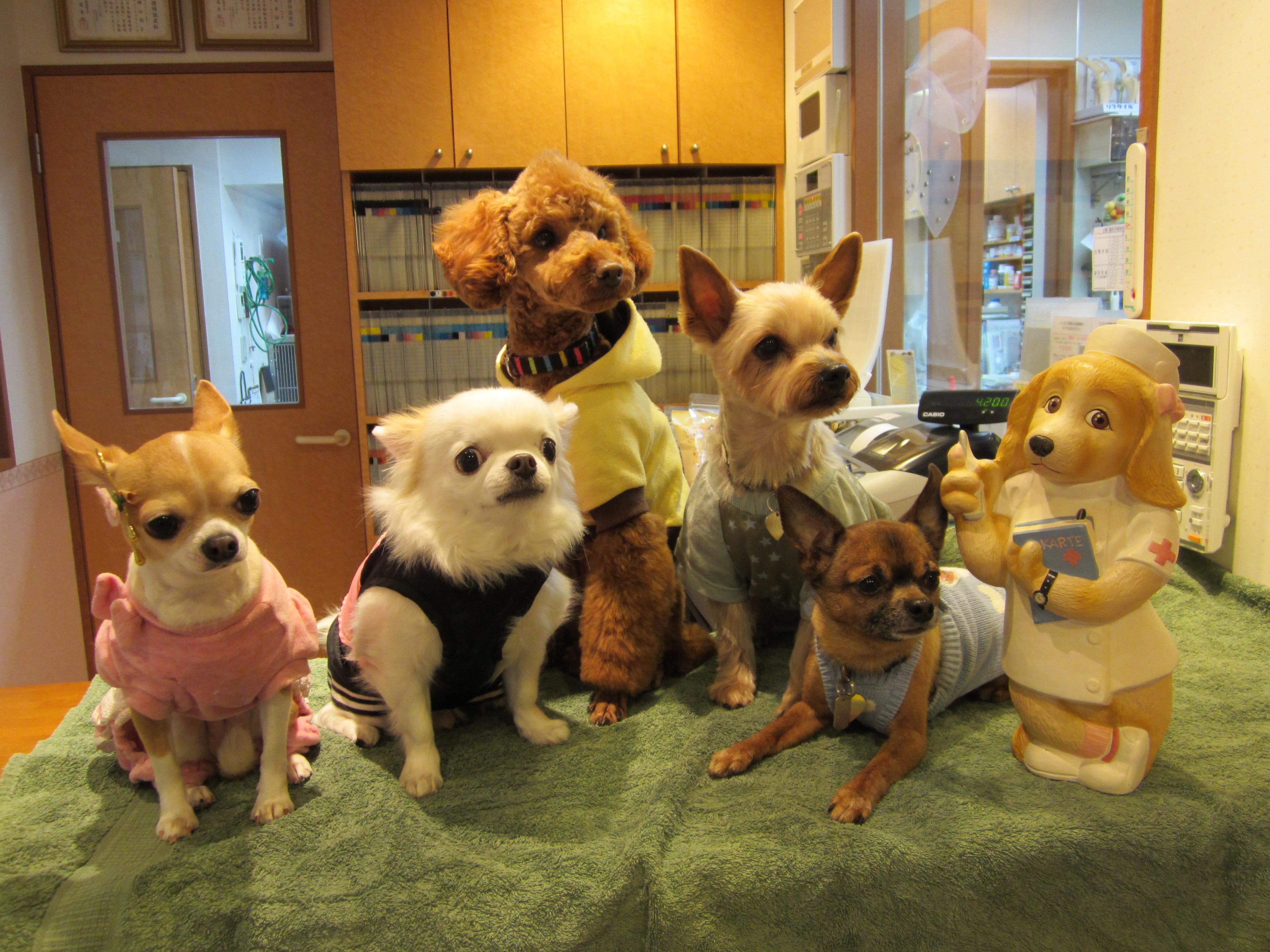 動物看護師&トリマー募集
