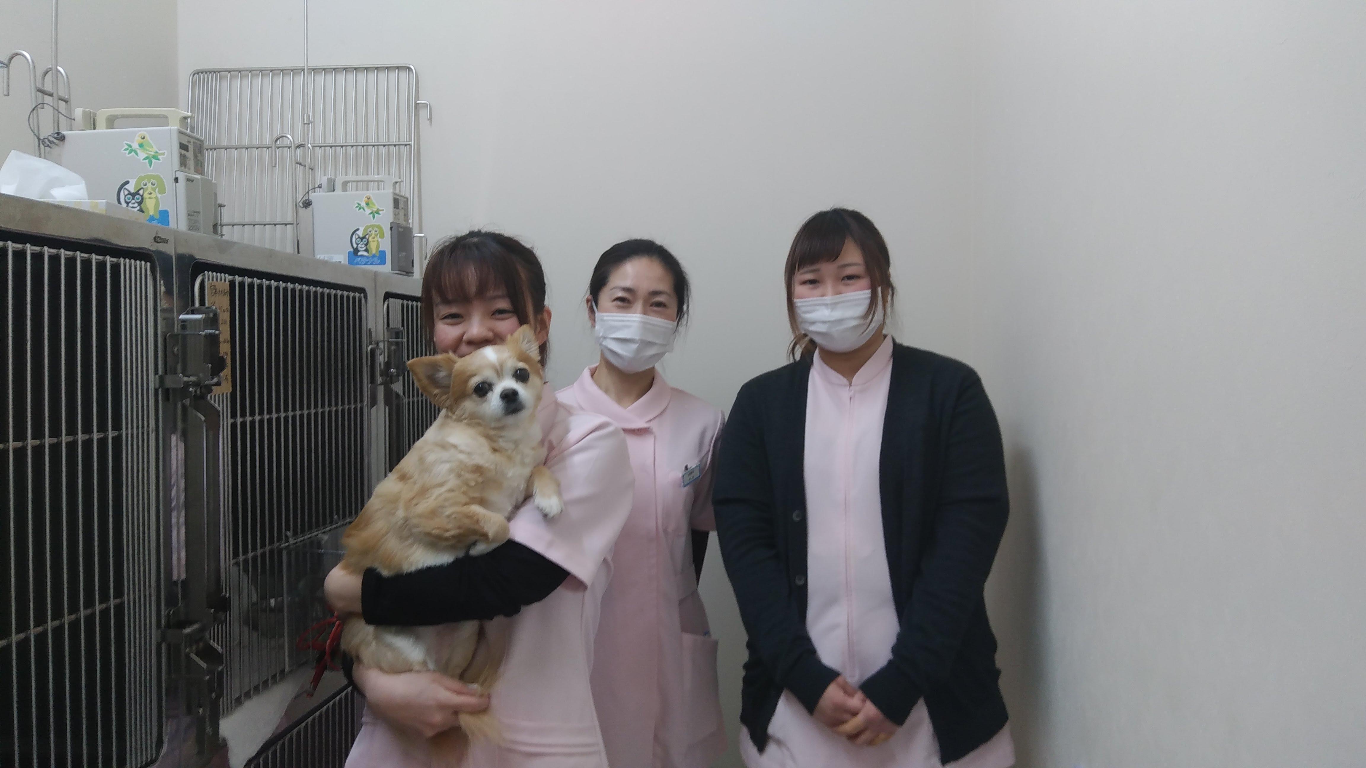 動物好きのスタッフが多いです。