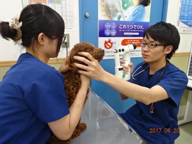 獣医師として成長できる環境です