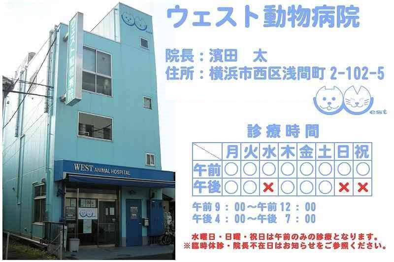 【社保完備】ウェスト動物病院 動物看護師募集!