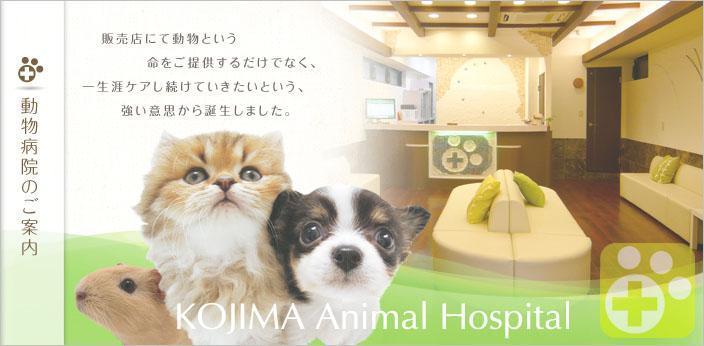 江東区亀戸。コジマ動物病院グループで働きませんか?