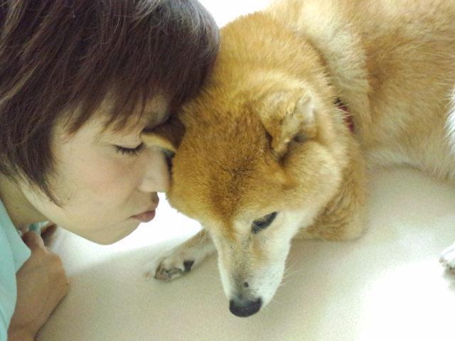 老犬の介護STAFF募集