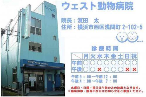 【アルバイト】横浜駅徒歩 ウェスト動物病院 動物看護師募集