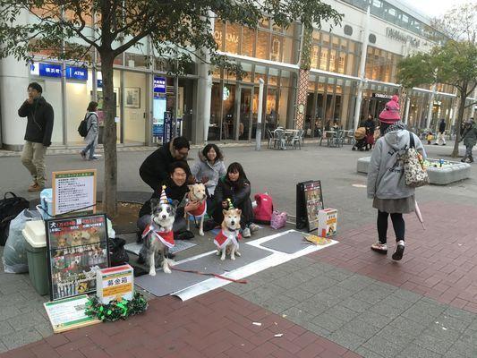 動物愛護団体のスタッフ募集