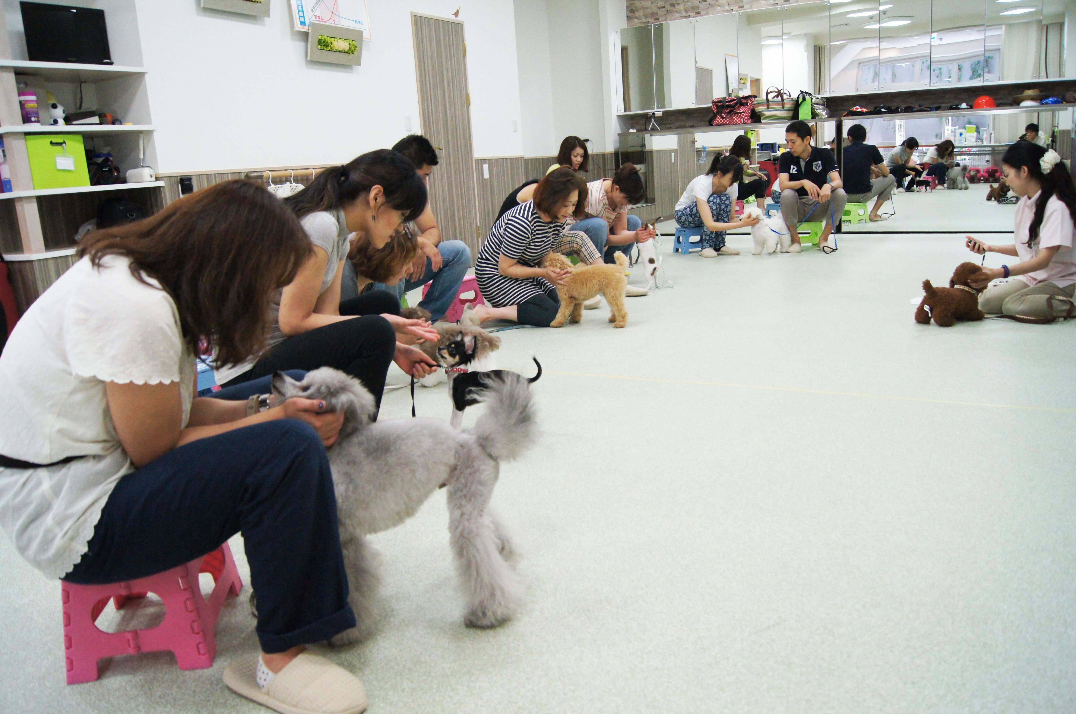 日曜日には飼い主のグループレッスンがあり、イントラ技術も学べます。正社員は日曜出社が多くなります