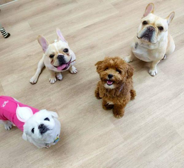 (運転できる人歓迎)犬の保育園 スタッフ募集(契約社員)
