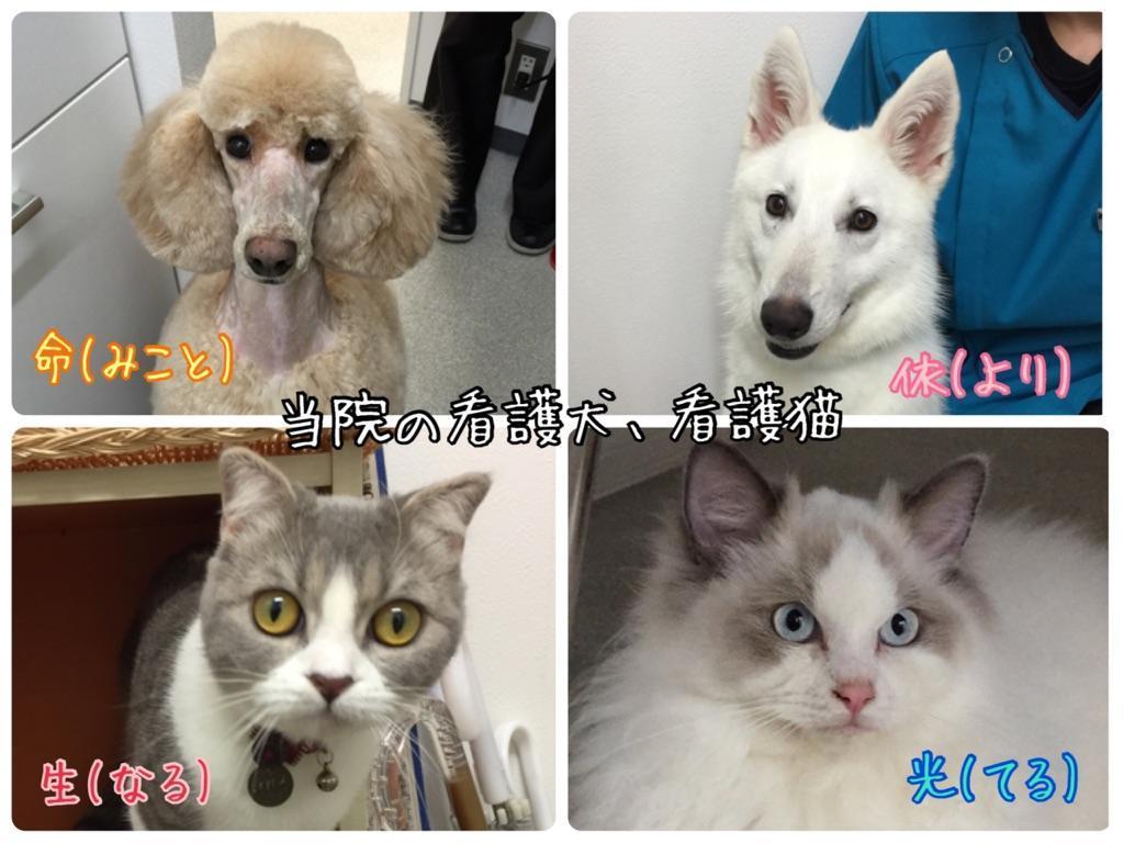 看護犬、看護猫です。
