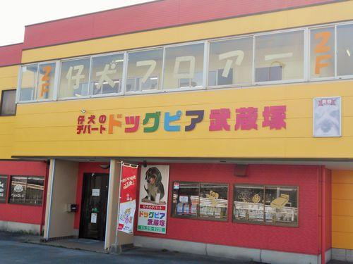 ドッグピア武蔵塚 トリマーさん販売員さん募集中!
