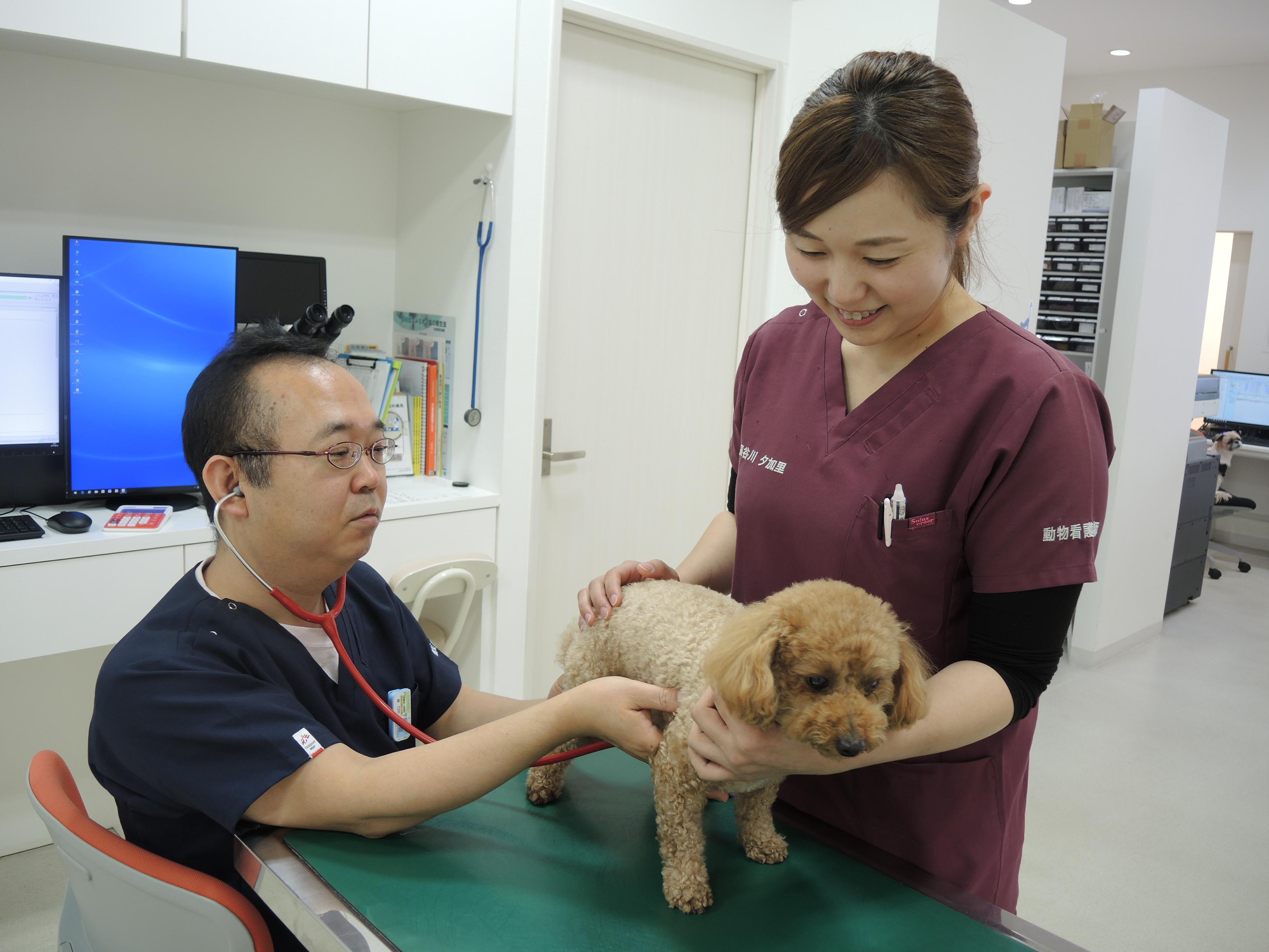 新卒・中途OK~福岡県・動物看護師 ASAP動物病院(分院)