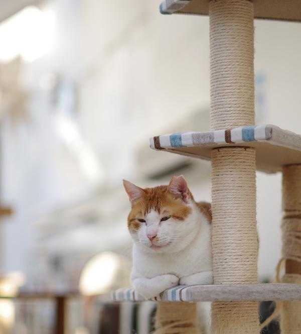 シェルターの猫の様子