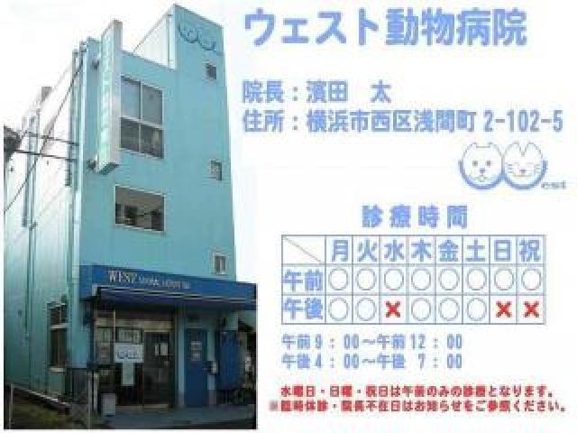【アルバイト】横浜駅徒歩 ウェスト動物病院 動物病院補助業務