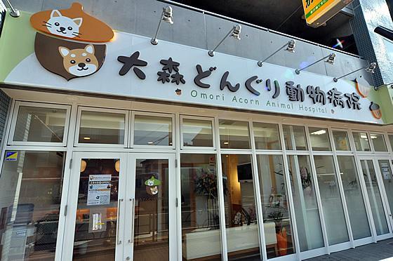 【動物看護師募集】大田区 :大森どんぐり動物病院