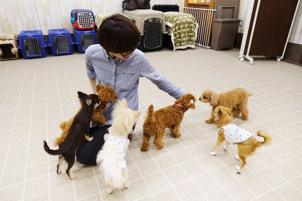 「横浜」犬の複合施設ワンコットでのトレーナー募集!