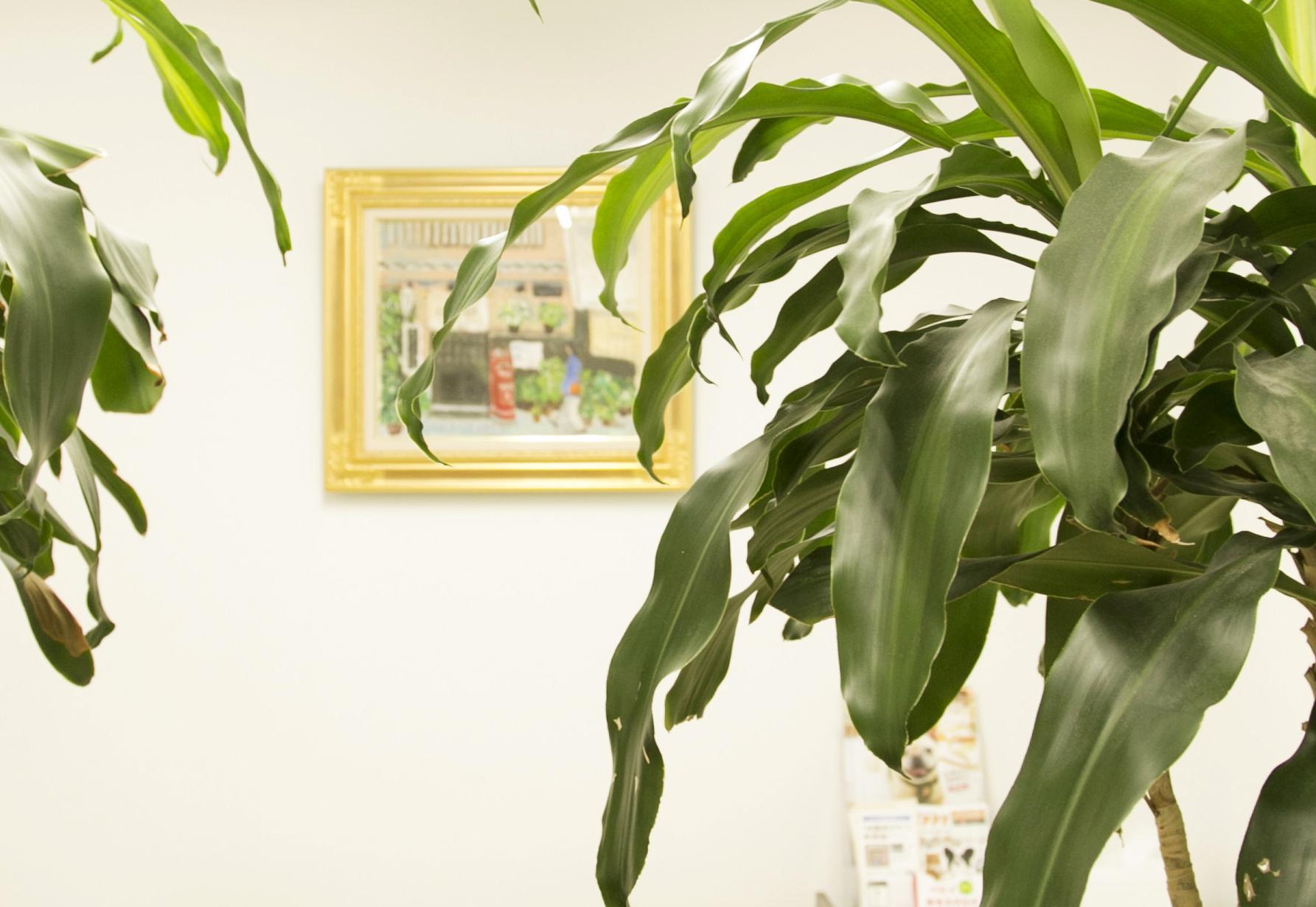 ドラセナの木です。病院内で茂っています。