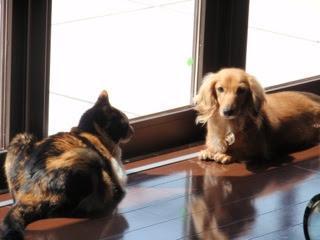 病院の愛犬(18歳2ヶ月)愛猫(17歳5ヶ月)R1/9/18現在
