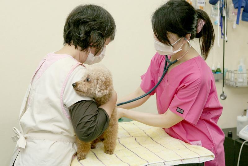 【渋谷区】土日勤務できる方大歓迎!わんこの歯医者さん