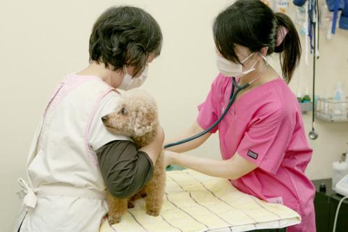 【渋谷区】月に1~2回勤務できる方大歓迎!わんこの歯医者さん