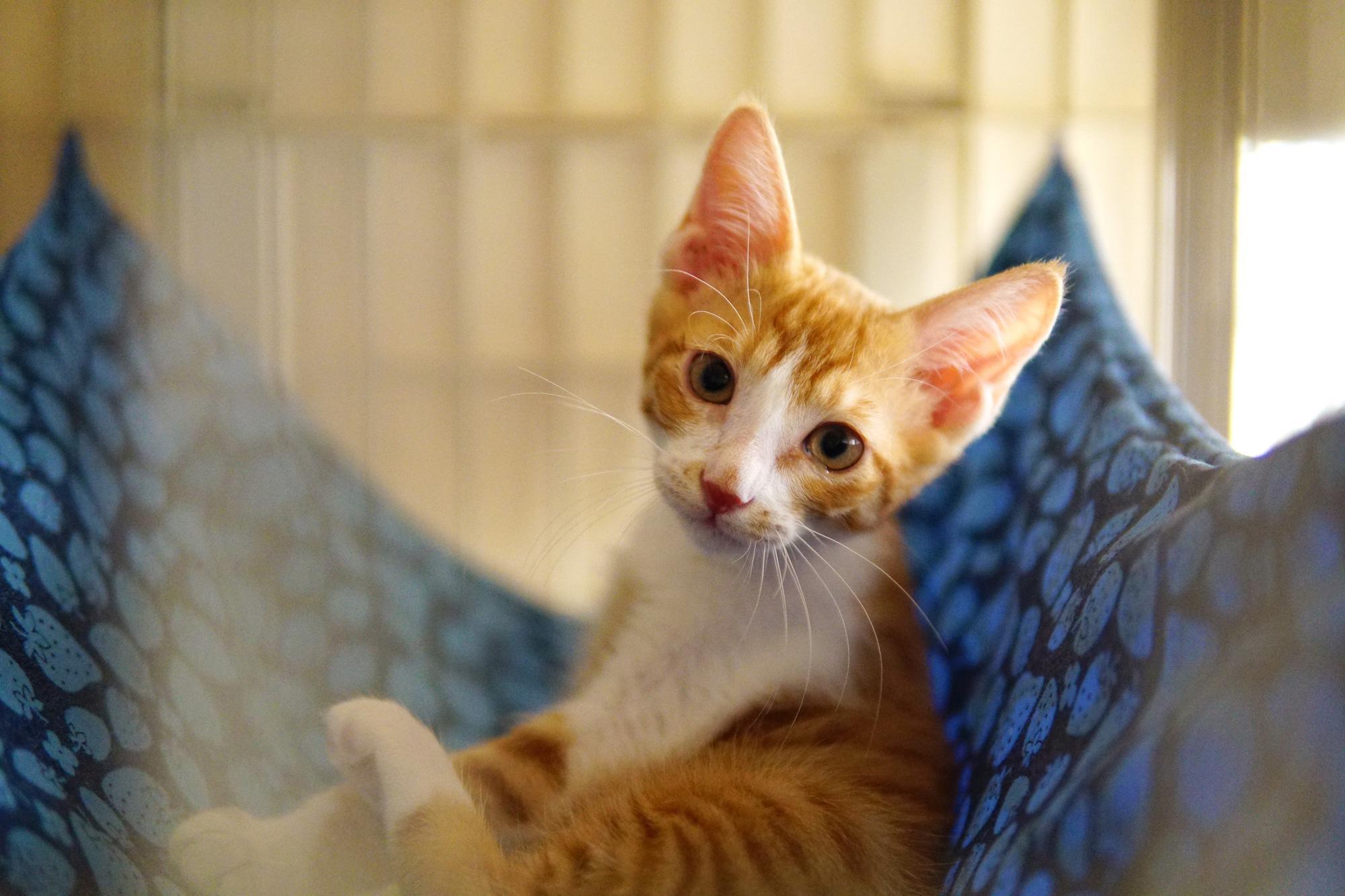 保護猫カフェなどの広報スタッフ募集
