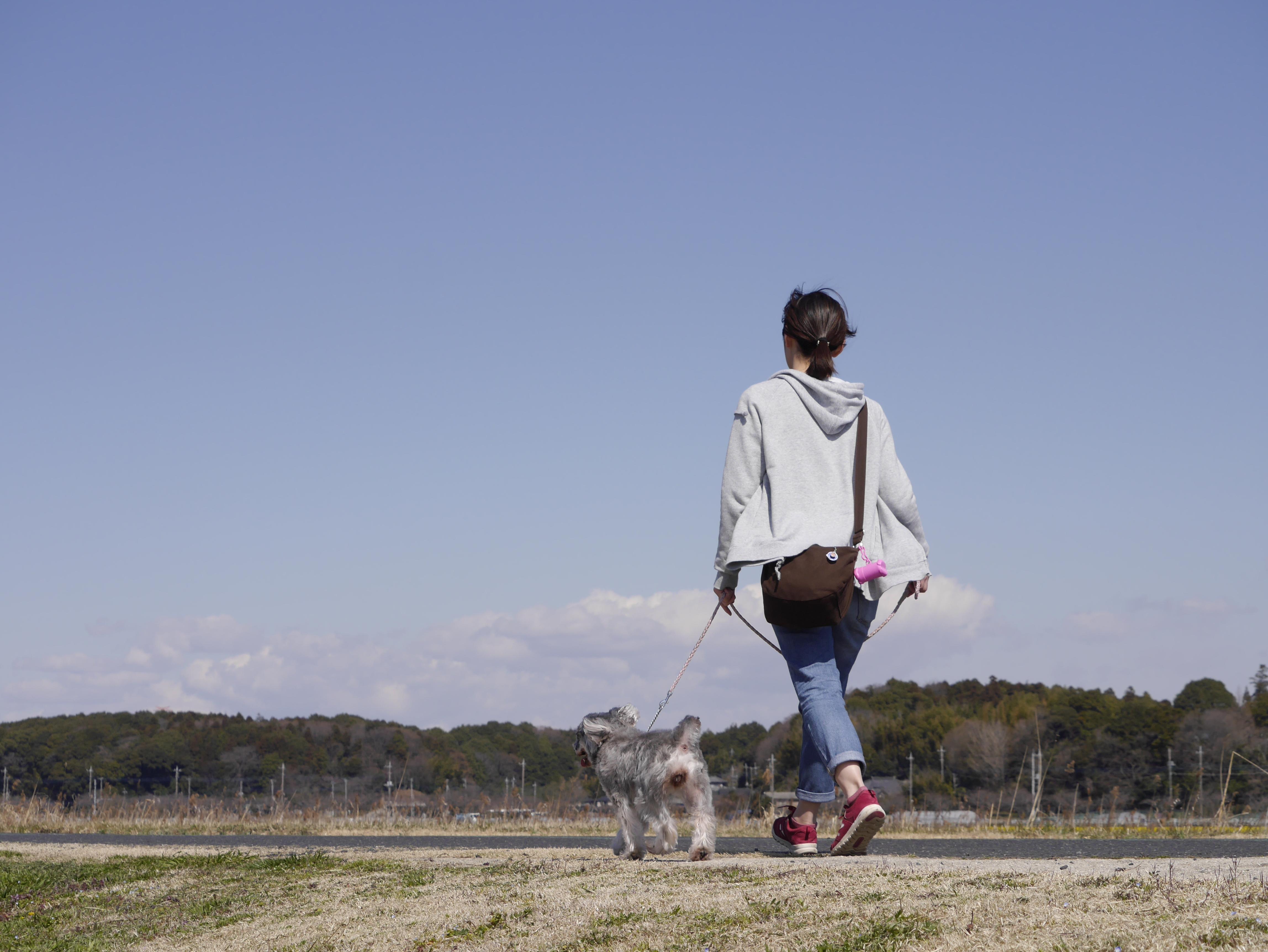 松戸市周辺でペットシッター募集!