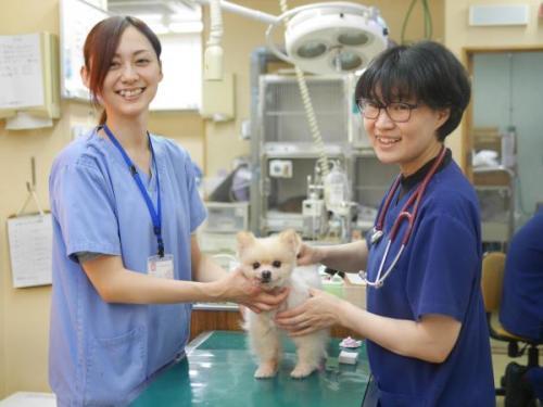 アニファ動物病院 五香院◇獣医師として成長できる環境です