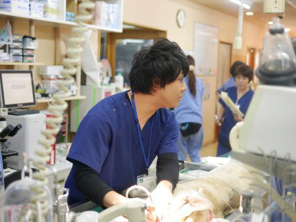 <アニファ埼玉動物医療センター>成長できる・学べる環境です