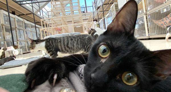 保護猫カフェの飼育スタッフ(大塚)