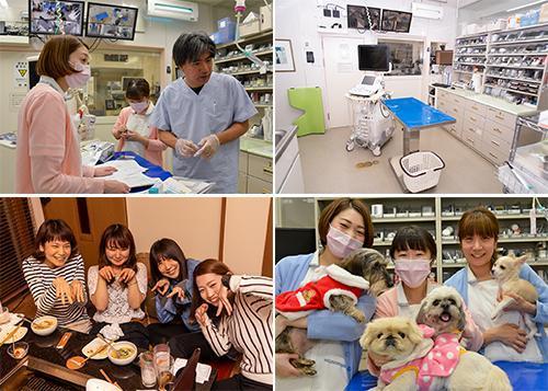 獣医師経験者募集!症例、手術多数、有給消費率100%
